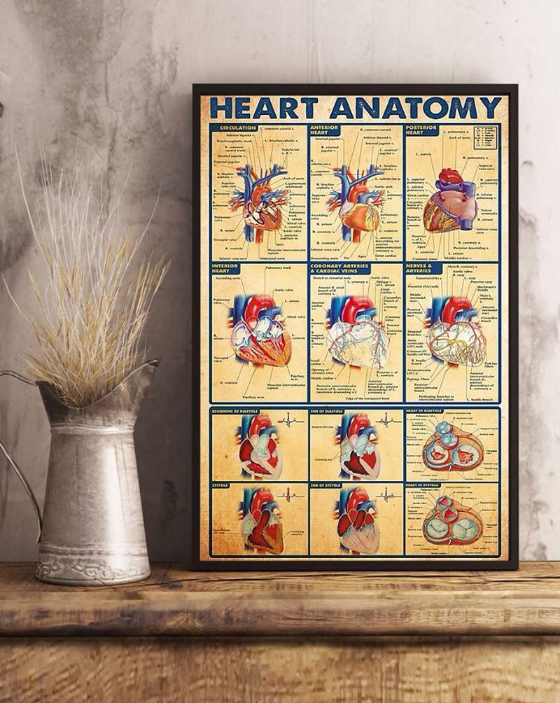Anatomy of heart ❤️