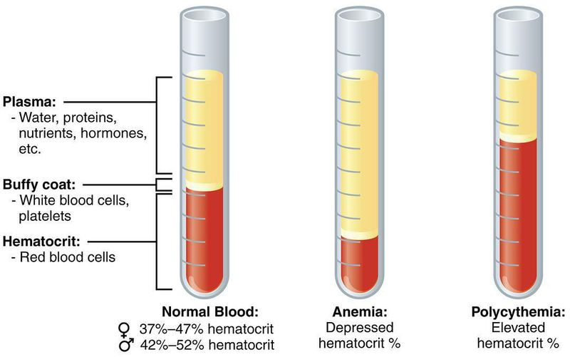 Normal components of blood