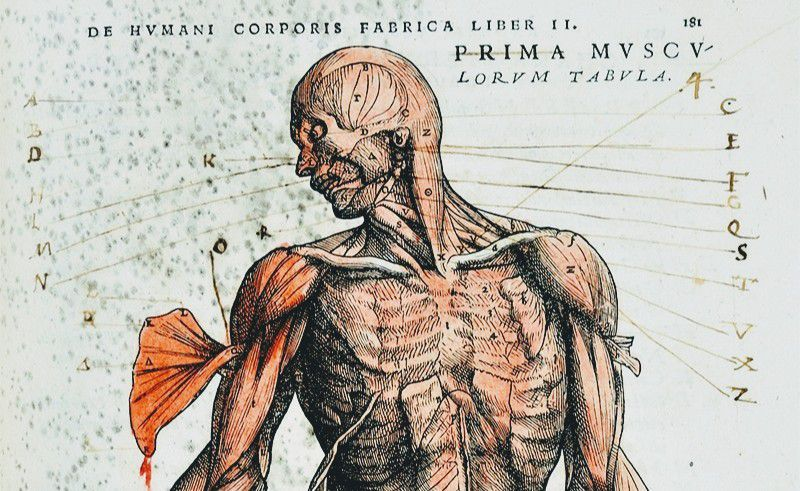Anatomy ♥️