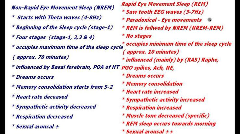 Non REM vs REM sleep