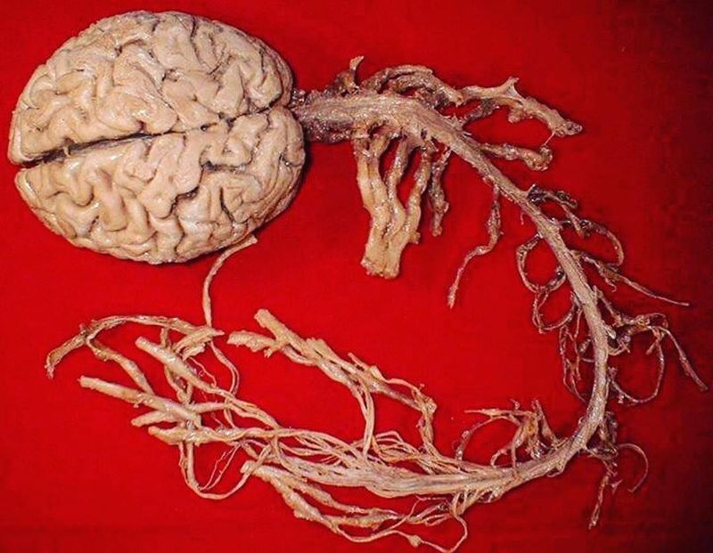 The nervous system!!