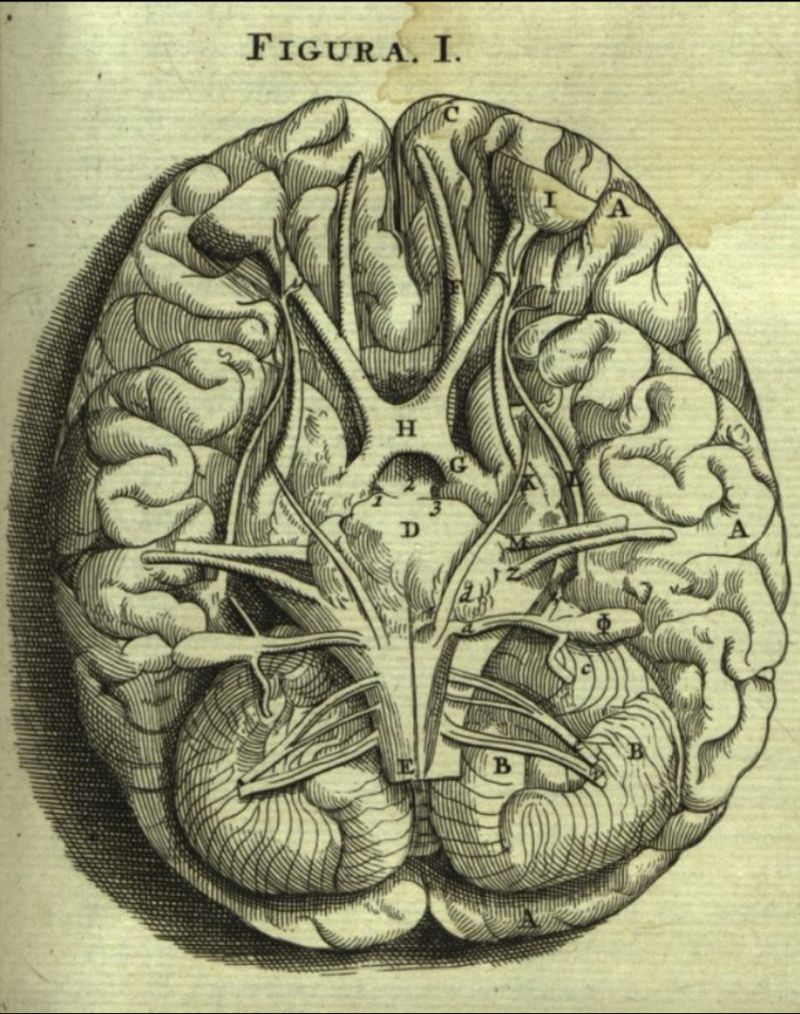 Brain ♥️