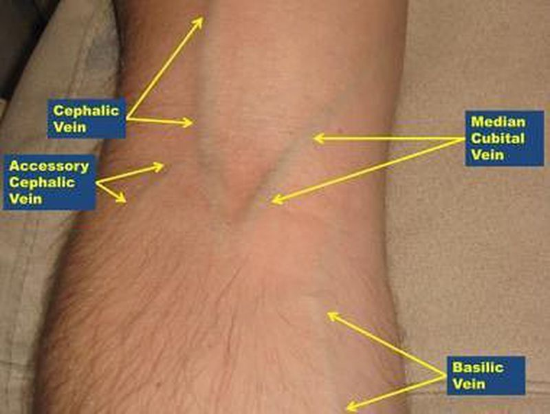 Labeled arm showing the antecubital veins