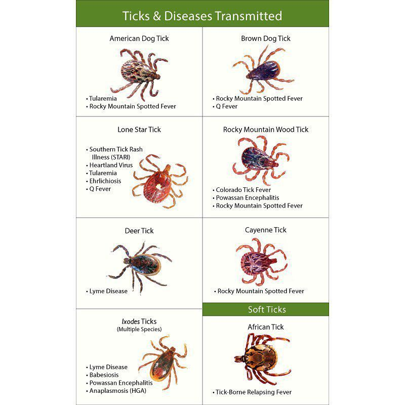 Different ticks & their respective diseases
