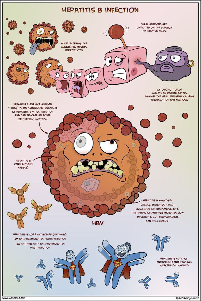 HBV Hepatitis B virus