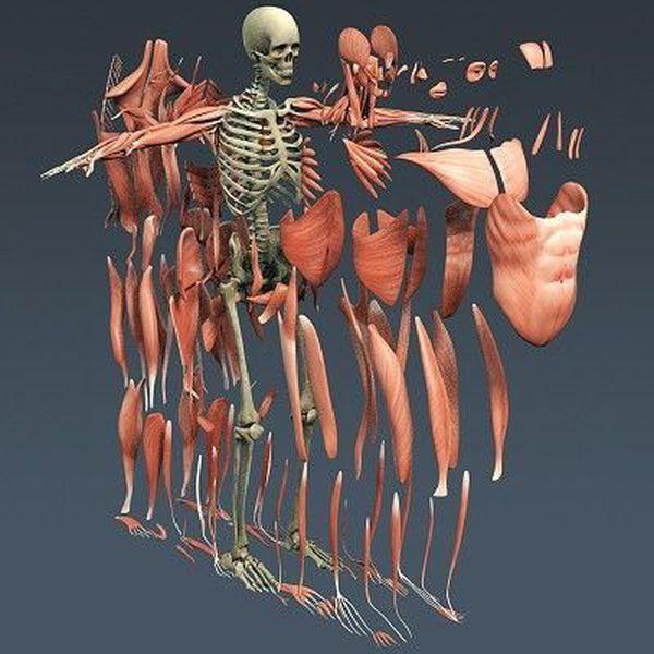 Открытки, анатомия прикольные картинки
