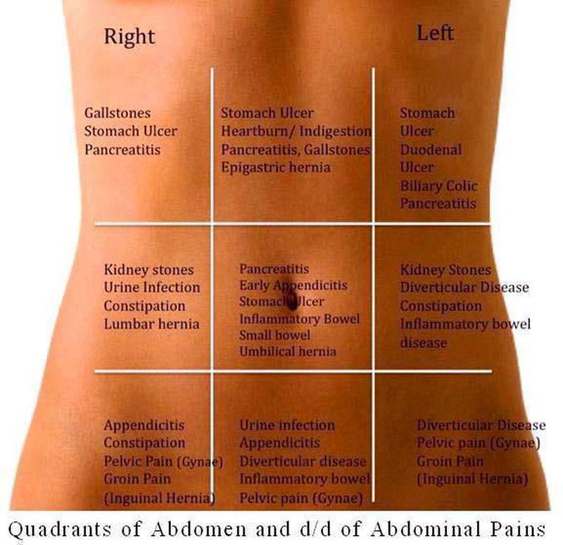 quadrants of adbdomen