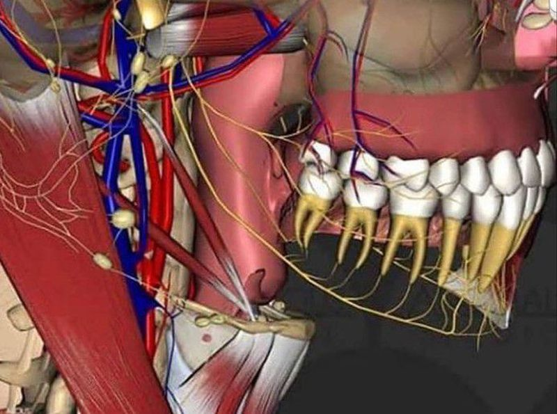 3D view of dental nerves