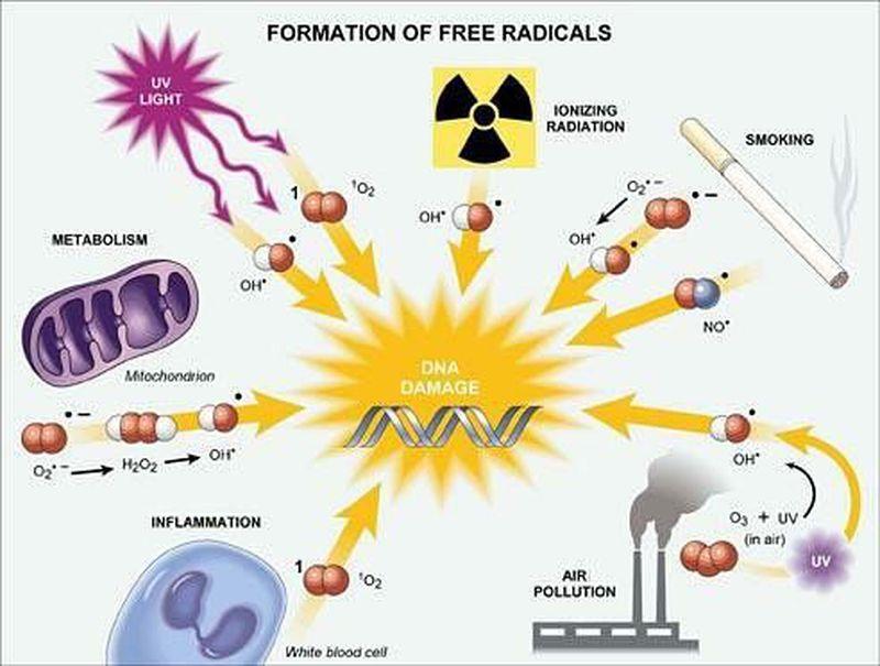 Free Radicals Injury
